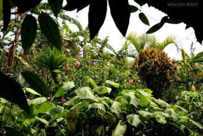 j118-Ogród naplantacji orzechów makadamowych