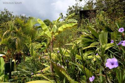 j127-Ogród naplantacji orzechów makadamowych