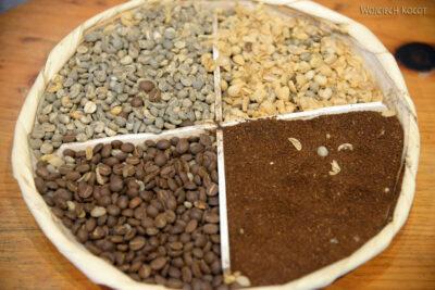 j142-Na plantacji kawy