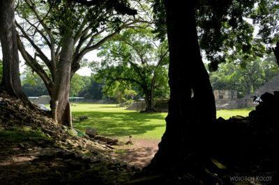 n072-Copan-wielkie drzewo