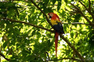n153-Papugi