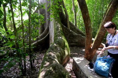 n162-Copan-na ścieżce przezdżunglę