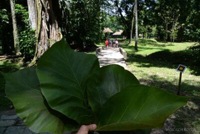 o005-Parque Arqueologica Quirigua