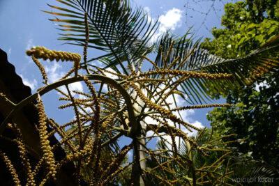 o074-Parque Arqueologica Quirigua-roślinność