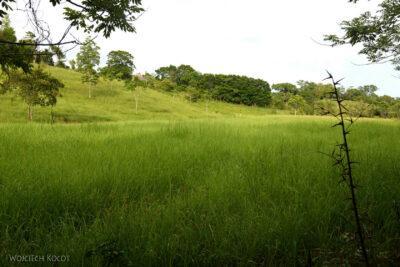 p217-Przyroda wokolicy Hacienda Tijax