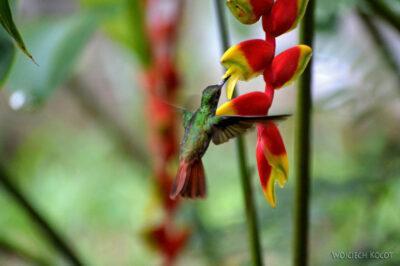 q004-Kolibry wHacienda Tijax