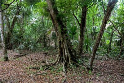 r008-Tikal-Piramida4 iKwa