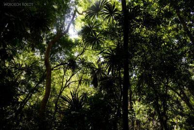 r034-Tikal-przez dzunglę