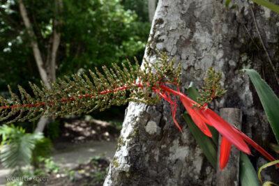 r062-Tikal