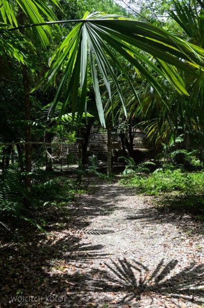 r101-Tikal-przez dzunglę