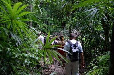 r103-Tikal-przez dzunglę
