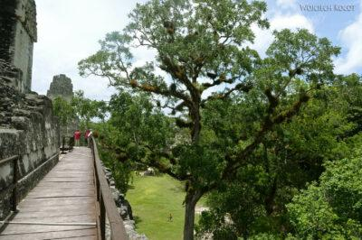r117-Tikal-Templo II