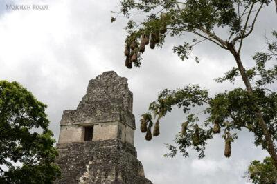 r149-Tikal-Templo I
