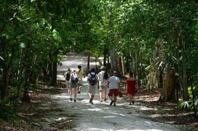 r224-Tikal