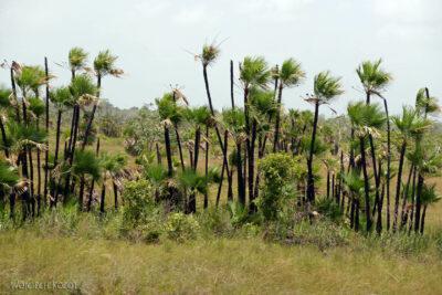 s007-Płaskie pejzaże Belize