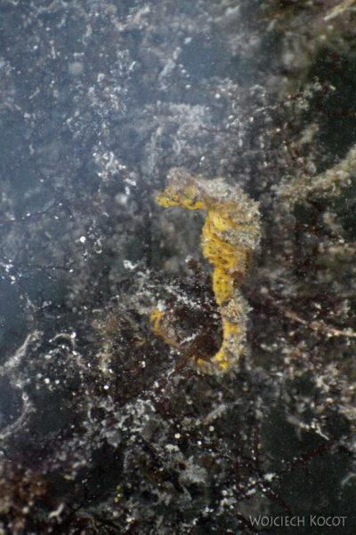 t225-Caye Caulker - ryby przy brzegu