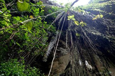w215-W Cenote Ik-Kil