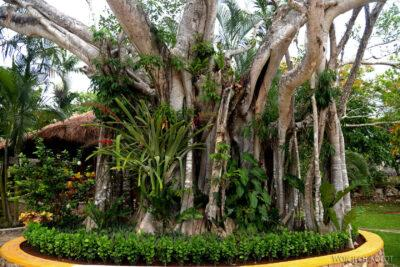 w225-W Cenote Ik-Kil