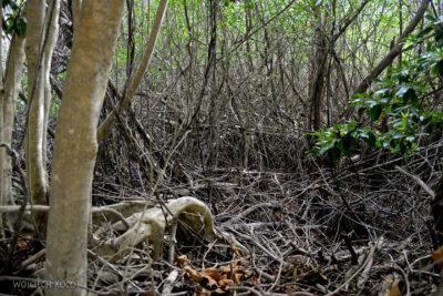 x002-Do Zona Arqueologica Tulum
