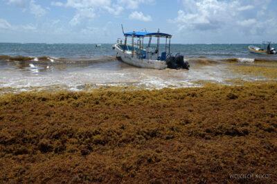 x058-Tulum - plaża pełna wodorostów