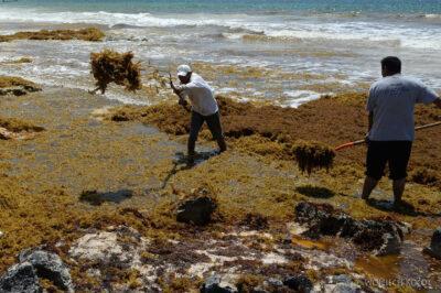 x068-Tulum - plaża pełna wodorostów