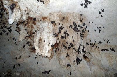 x107-W Gran Cenote - nietoperze