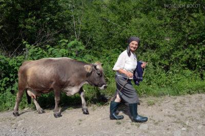 Uk248-Starsza Pani ijej krowa