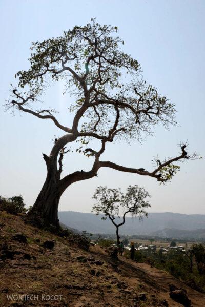 Et03085-Okolice wodospadu Blue Nile