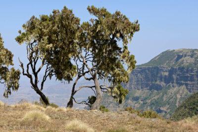 Et05110-Góry-Simien-treking