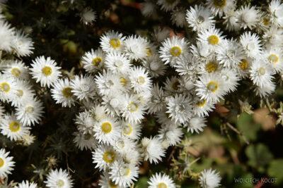 Et05205-Góry-Simien-treking-kwiatki