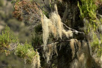 Et05215-Góry-Simien-treking-porosty