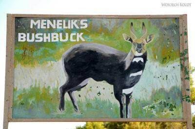 Et05233-Góry-Simien-treking-Bushbuck