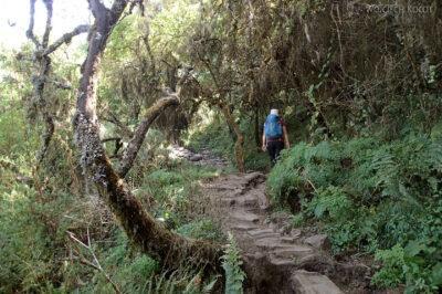 Et06015-Góry-Simien-treking