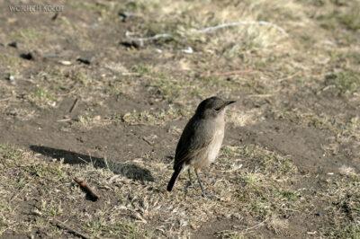 Et06124-Góry-Simien-treking-ptak