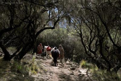 Et07011-Góry-Simien-treking