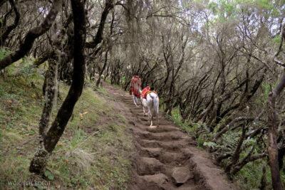 Et07013-Góry-Simien-treking-porosty