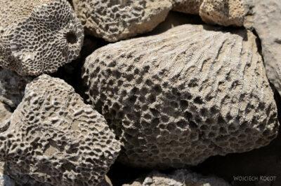 Et13074-Danakil 3-skamieniałe kolalowce
