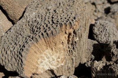 Et13078-Danakil 3-skamieniałe kolalowce