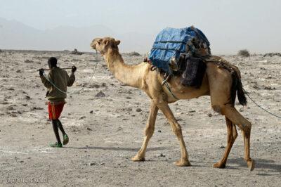 Et13115-Danakil 3-karawana solna-wielbłądy