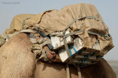 Et13119-Danakil 3-karawana solna-wielbłądy
