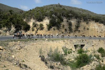 Et14454-Danakil 4- solna karawana-wielbłądy