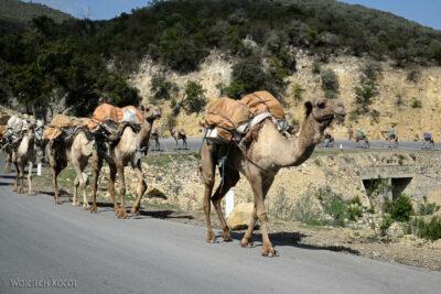 Et14457-Danakil 4- solna karawana-wielbłądy