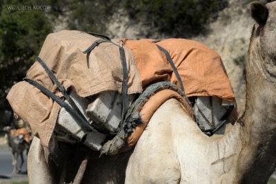 Et14459-Danakil 4- solna karawana-wielbłądy