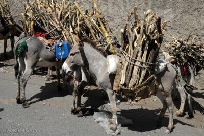 Et16114-Harar-bazar