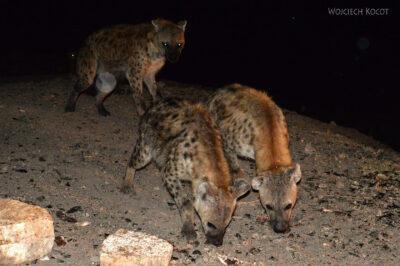 Et16224-Harar-karmienie hien