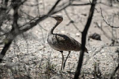 Et19011-Awash National Park