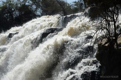 Et19033-Awash National Park