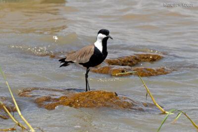 Et20155-Rejs poLake Ziway-ptak
