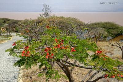 Et20191-Nad Lake Langano