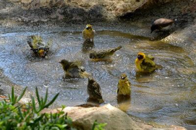 Et20223-Nad Lake Langano-ptak Wikłacz